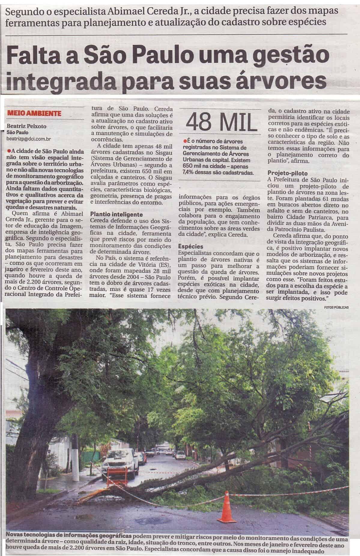 Falta a São Paulo uma gestão integrada para suas árvores